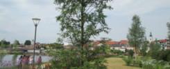 ©: Gartenschau Tirschenreuth: Ein Urweltmammutbaum wird bis zu 50 Meter groß.